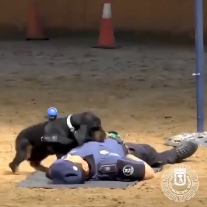 Police Dog Performs CPR To Save His Partners Life 😫🏆🐶