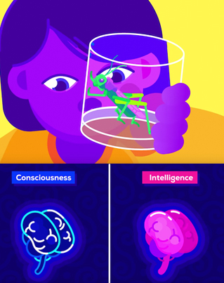 The Origin of Consciousness: How Unaware Things Became Aware 🤔💡🔴👑